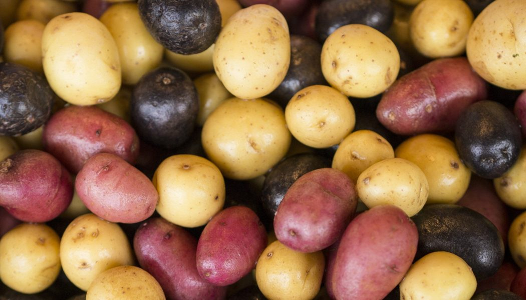 aardappelen horeca belgië soorten