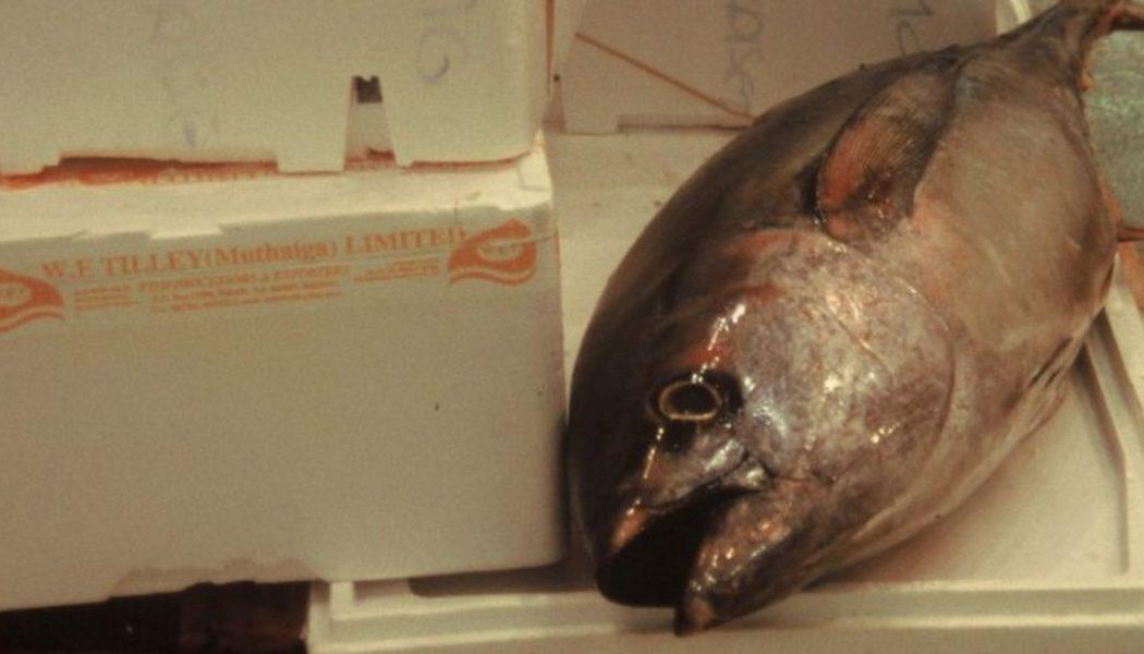 tonijn horeca belgië