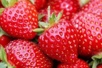 aardbeien fruit Horeca België (1)