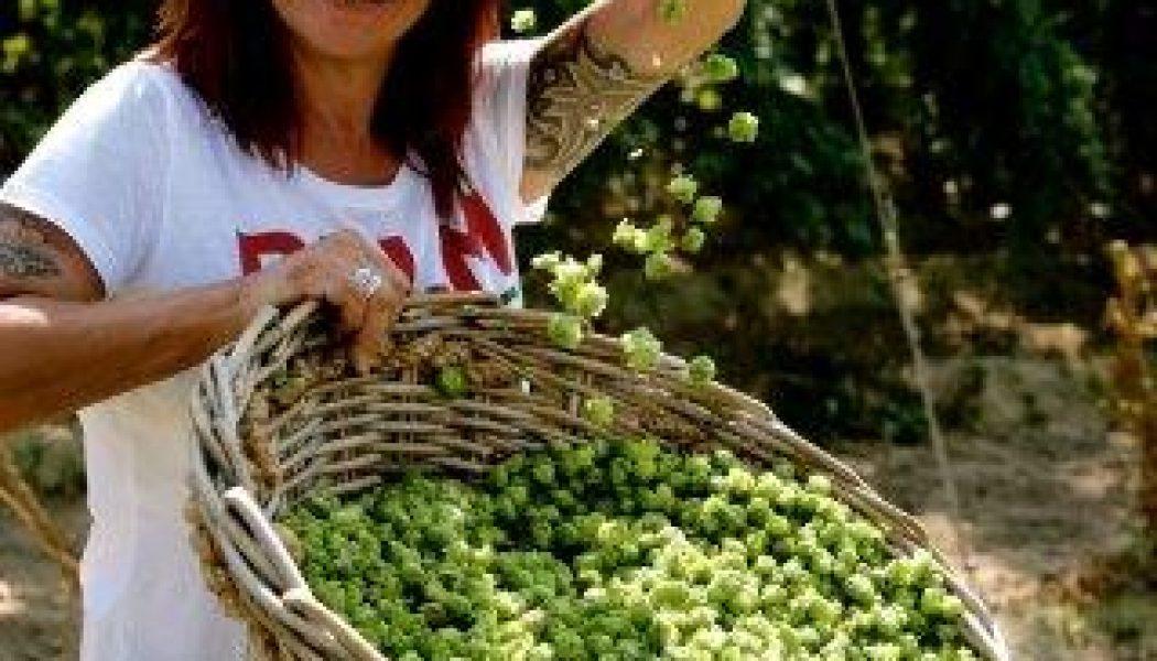 Recordopkomst voor zevende publieke hoppluk van Brouwerij Palm